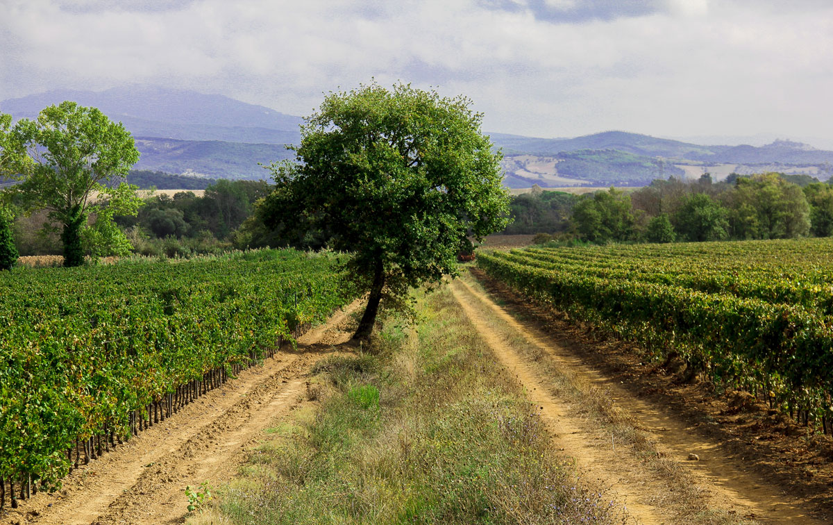 4 Reasons to Visit Gavoranno Tuscany