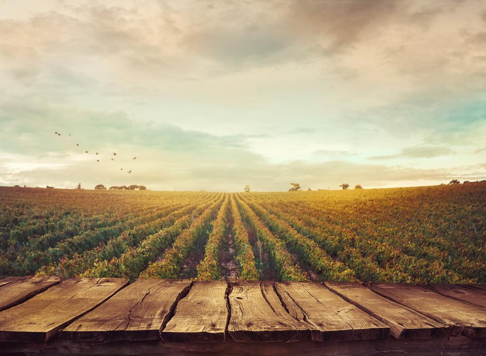Le citazioni Let It Wine: Robert Louis Stevenson