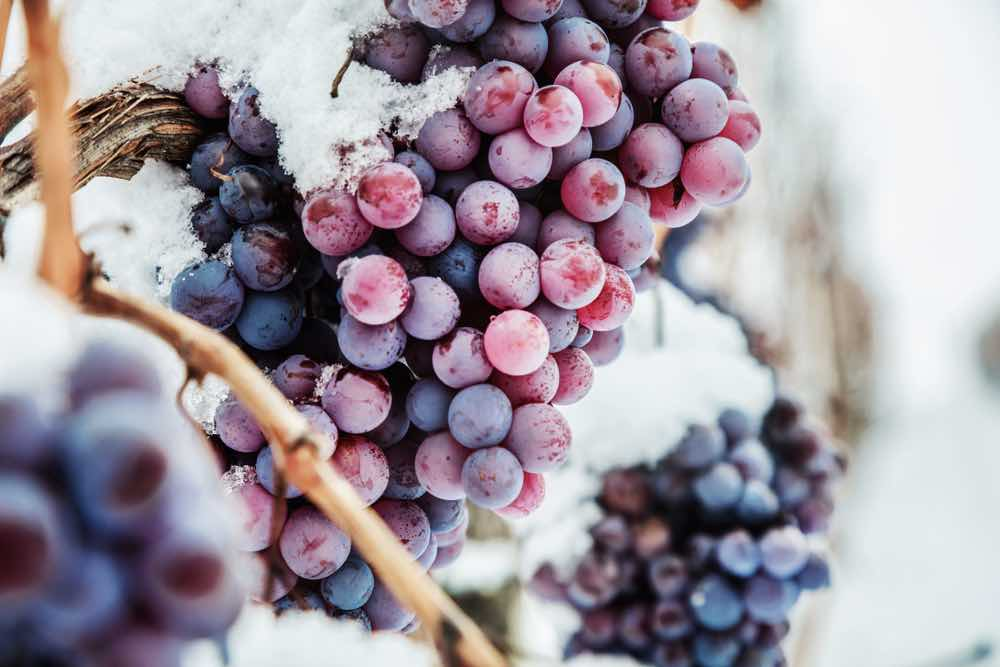 What Is Eiswein?